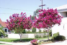 Trees for gardens