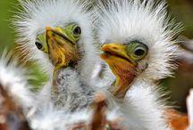 Birds, birds, birds / Our fine feathered friends