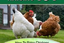 Chicken Farmers