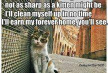 cat adoption project