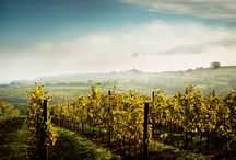 """Wine Estates in Austria / Discover all winegrowers and wineries of """"castle hotels & mansions"""" in Austria. This country is very famous for it's wine and winegrowing regions. Nearly all of our members have a long tradition in the history of winegrowing and great knowledge about their products made out of all kind of grapes. Here you can find some impressions.   Do you want to learn more about our wineries?  Visit: http://www.schlosshotels.co.at/en/stories-more/winegrowers.html"""