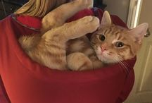 cat sak ##% good / haha Funny cat sak love this pic