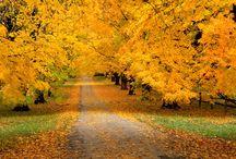 I love autumn!!!!