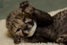 Oh sooooo Cute!!! / by Melea Gibbs