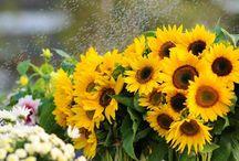 Entdecken die Blumenwelt in Vietnam vom Juli bis Dezember / Im Herbst und Winter blühen in Vietnam viele schöne Blumenarten. Beim Reisen nach unserem Land hat man die Chance, diese Blumenarten neben den Sehenswürdigkeiten zu bewundern.