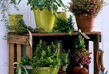 Flower and Plant organizer
