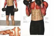 welke oefening voor welke spieren