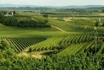 Cestování za vínem / Wine travel / by Global Wines