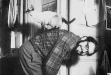 Famous writers and cats