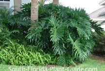 My Florida Garden!