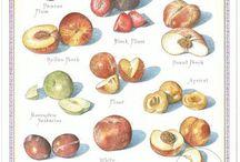 John Burgoyne Studio Illustration