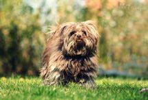 Perros de  barrio / Fotografía canina: Mr trufa sale a la calle y se encuentra con amigos de todo tipo.