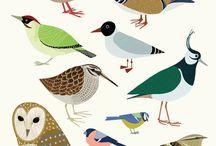 Birding Man