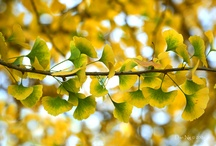 Nature Inspired: Leaves / by Michael Aram