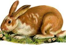 Vintage Animal-graphics.