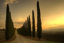 Italy / by Jill B