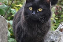 Gatos / Gatos fofos