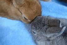 Animales / Aquí podréis ver a los animales, no les maltraten por favor.