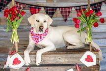Valentine's Day Dog Bandanas