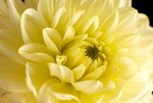 Beautiful Flowers, 2 / 100 pins of Flowers, Plants