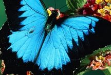 Insect / Butterfly