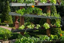 vegie gardens ideas