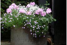 Flowers Sommer