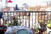 #BalconyGarden Camera / Videos and blog posts about our sweet little Balcony Garden in Los Angeles Who's visiting the Balcony Garden? Doves, Finches, Hummingbirds, Scrub Jays and more!