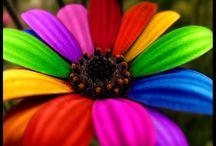 i love flowers... / by Denise Meier