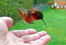Birds & Flying Creatures