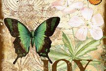 Joy and Butterflies