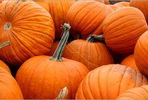 Pumpkin Recipes / by Allison Kaseman