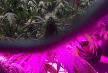 plants (herbal )
