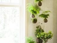 ideas con plantas