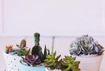rastlinky