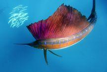 world aquarium
