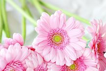 Flowers and painting inspiration / reference photos and inspiration