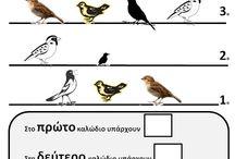 birds-πουλια