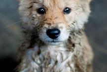 I want a dog. / by Christine Kerns