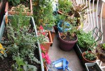Gardening / by Tanya Harned
