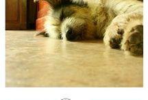Hunde Verhalten / Warum tun Hunde, was sie tun?