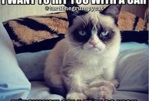 Funny ─ Lustiges / Memes, Jokes und Lustiges.  Need something to laugh? :)