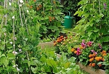 veggie patch and food forrest