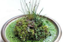 Indoor waterplants