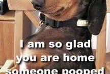 Hahahahaha! / by Cat Arlein