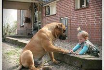 favourite doggies