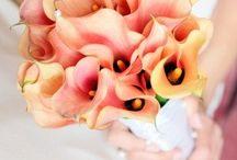 Wedding / by Melissa Salvino