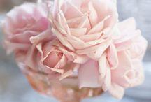 """I love the rose of Alpha Xi..."" / by Alpha Xi Delta"