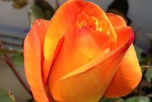 Flower reality / Garden paradise
