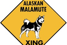Alaskan Malamute Signs and Pictures / Warning and Caution Alaskan Malamute Dog Signs. https://signswithanattitude.com/alaskan-malamute-signs.html